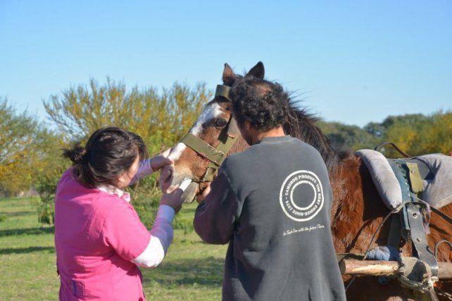 Mejor porvenir. Procuran que los animales recobren la salud y el bienestar.