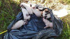 desalmados tiraron siete perritos a la basura