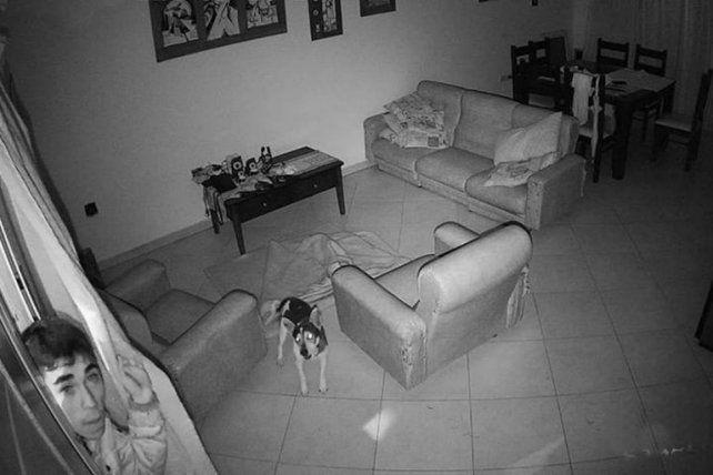 Un perro evitó un robo en una vivienda de Concordia
