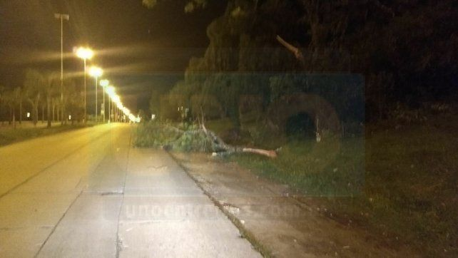 Árbol caído en calle Antonio Crespo