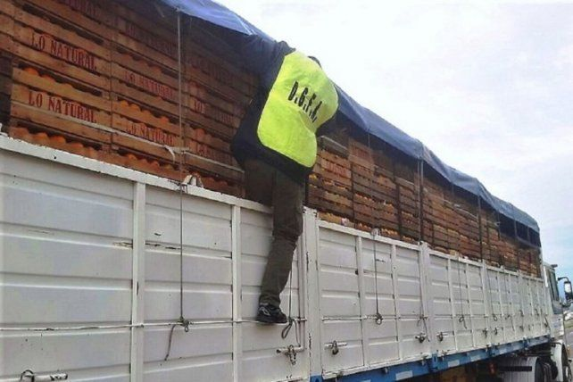 Se intensifican los controles al transporte de citrus en rutas provinciales