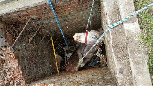 Bomberos rescataron a un caballo que cayó a un pozo profundo