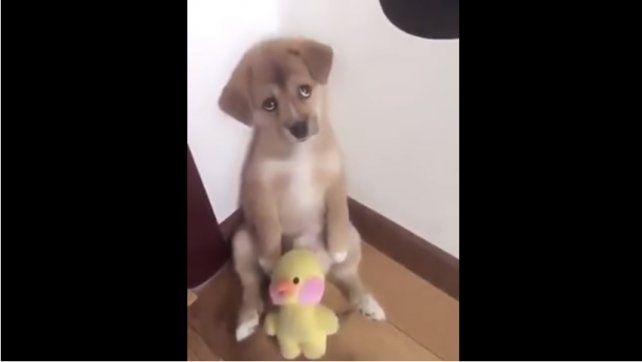 El reto de un hombre a su cachorro que se viralizó por tierno