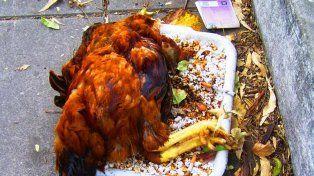 En el lugar encontraron una gallina sacrificada