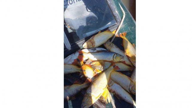 Pique ilegal: pescadores furtivos se llevaban 116 dorados y 42 bogas