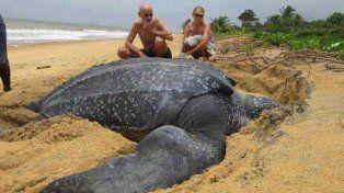 VIDEO: Una tortuga de 700 kilos apareció muerta en una playa española