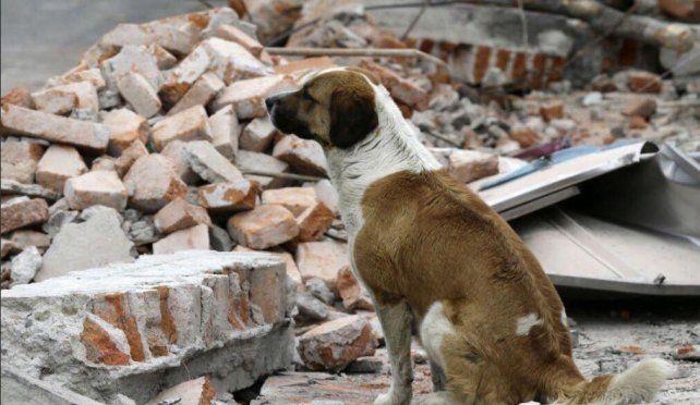 VIDEOS: Las dramáticas escenas de rescate tras el terremoto de México