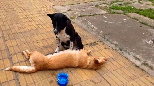 Una perra murió y su compañero no quiso abandonarla
