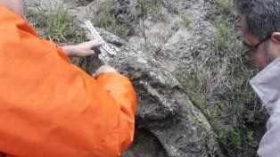 Tremendo caparazón. El gliptodonte tendría el tamaño de un automóvil. Foto: Policía Federal
