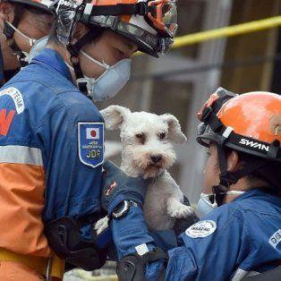 El grupo de expertos japoneses lograron rescatar a un perro raza Schnauzer del edificio en ruinas, ubicado en el Conjunto Urbano Tlalpan.