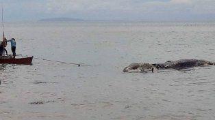 Una monstruosa criatura marina desconcertó a todo un pueblo