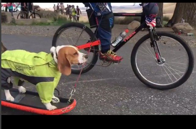 Video: Un perro bajó la pendiente más conocida del mundo