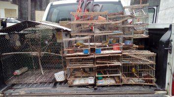 Destrucción total. Las jaulas y tramperas fueron incineradas. Foto: PER