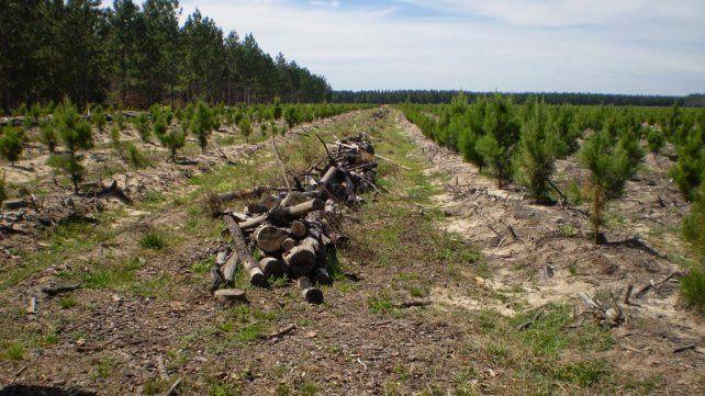Objetivo. Se busca un marco de colaboración para sumar valor agregado a la producción forestal.