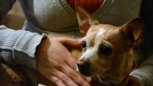 Su padre murió en el terremoto, pero logró salvar a su perrita: la historia que conmueve a México
