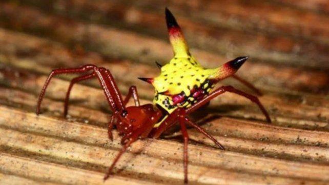 La araña con forma de Pikachu
