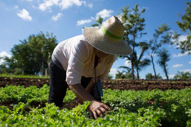 En el encuentro estarán presentes productores de la zona que practican experiencias agroecológicas. Foto Ilustrativa. Internet.