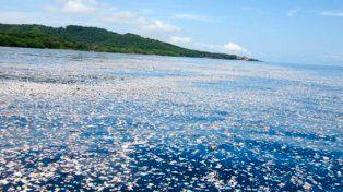La basura flotante llega hasta varias localidades de la costa norte de Honduras. Foto cortesía de Caroline Power.