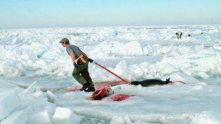 Muerte masiva de focas desata alarma en Rusia