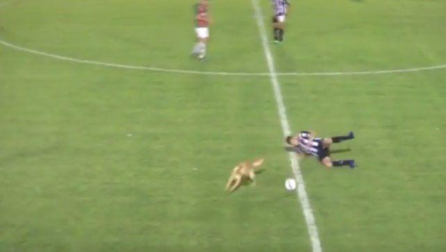 Un perro entró a jugar y derribó a un jugador