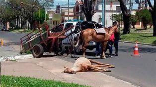 Potrillito murió en Concordia: Cayó exhausto porque venía trayendo 150 ladrillos