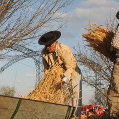 En el campo. Las actividades agropecuarias están consideradas dentro de las de más alto riesgo.