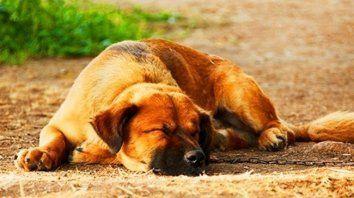 estas 6 posturas de sueno te ayudaran a entender mejor a tu perro
