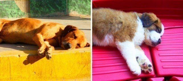 Estas 6 posturas de sueño te ayudarán a entender mejor a tu perro