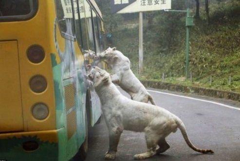 Impresionante zoológico de gente