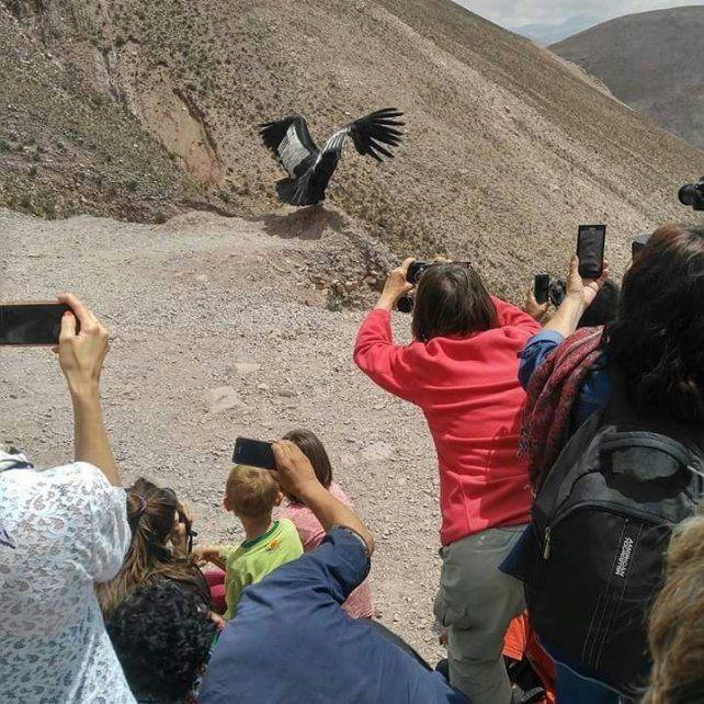 Liberaron a Willaq, el cóndor andino al que salvaron en el Ecoparque porteño