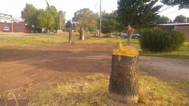 Los árboles que tenían décadas y que acompañaban la traza fueron cortados. Foto UNO Pablo Felizia.