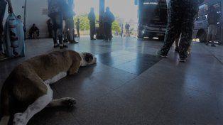 El perro disfruta que el piso está más fresco. Foto UNO