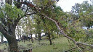 Fuerte tormenta en Basavilbaso: Chapas y ramas de árboles volaron hasta ruta 39