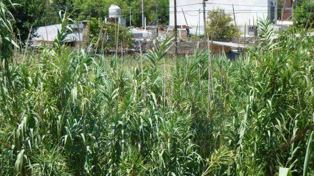 Vivir con miedo. La tupida vegetación de la zona favorece que los malhechores encuentren donde esconderse tras consumar los robos.