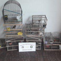 Jaulas y tramperas. Las aves fueron cazadas en la zona rural de Paso de la Arena.
