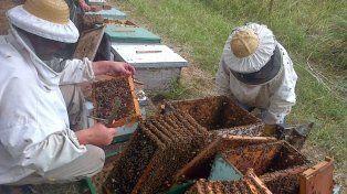 APICULTURA. Entre Ríos exporta 13.000 toneladas anuales de miel y es una de las principales provincias productoras.