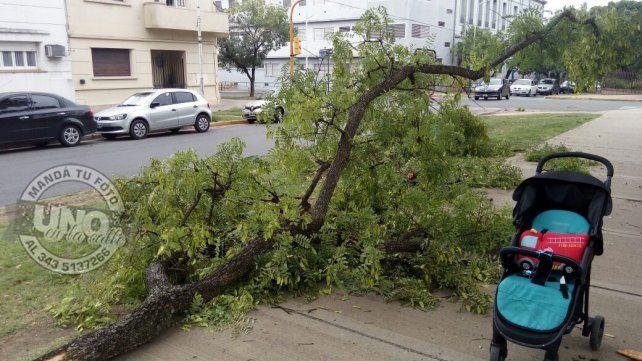 Cayó una rama de un árbol justo cuando pasaba con un bebé