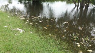 Análisis realizados a los peces muertos en Santa Fe dieron negativos