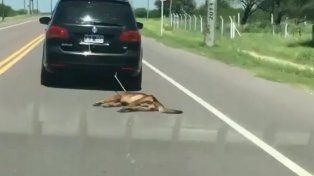 VIDEO: Ató un perro a su auto y lo arrastró por varios kilómetros