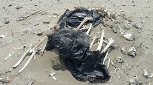 Chubut: encuentran huesos humanos en una playa