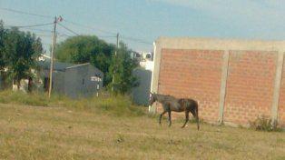 Un caballo