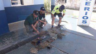 Decomisaron y liberaron aves silvestres en el departamento Islas