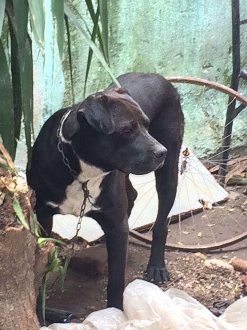 En enero. Tras presentar pruebas y hacer una denuncia rescataron de una casa a ocho perros y un gato.