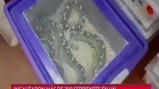 Secuestraron más de 200 serpientes en un departamento de Once
