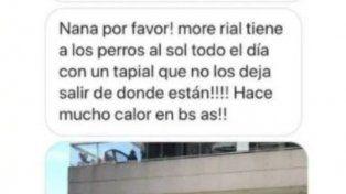 Denunciaron a Morena Rial por dejar a sus perros en el balcón y ella se defendió