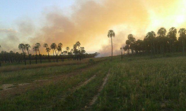 Se quemaron 150 hectáreas en el parque nacional El Palmar