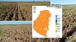 Sequía: la Mesa de Enlace de Entre Ríos dijo que hay pérdidas por 10.000 millones
