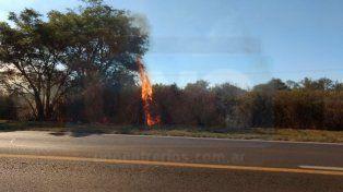 Las llamas trepan por los árboles. FotoUNO