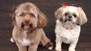 Facebook: El perro con cara de humano, furor en las redes