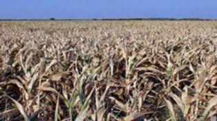 Definen proyecto para la emergencia por la sequía